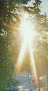 Solstråler gjennom tre (bilde til advent-1)
